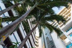 在蓝天背景和现代大厦的绿色棕榈树 图库摄影