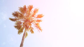 在蓝天背景的一棵棕榈树 库存图片