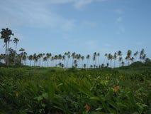 在蓝天背景的可可椰子树天际  免版税图库摄影