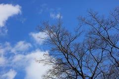 在蓝天背景的干燥树 库存照片