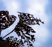 在蓝天背景的昆虫毁坏的秋叶  免版税图库摄影