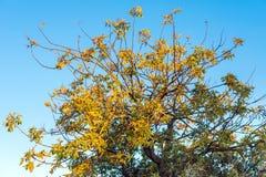 在蓝天背景的树在Siurana de普拉德,塔拉贡纳,西班牙 查出在蓝色背景 免版税库存照片