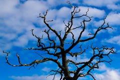 在蓝天背景的树梢与cloudes 免版税库存图片