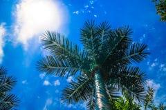 在蓝天背景的棕榈树与云彩的 免版税库存图片