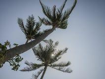 在蓝天背景的棕榈树 库存图片