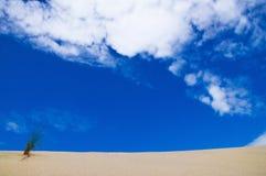 在蓝天背景的沙丘 水平 免版税图库摄影