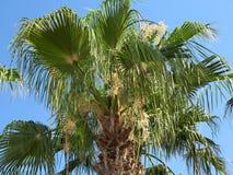 在蓝天背景的热带绿色棕榈叶 免版税图库摄影