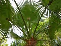 在蓝天背景的热带绿色棕榈叶 免版税库存照片