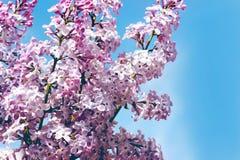 在蓝天背景的精美淡紫色花  免版税库存照片
