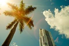 在蓝天背景的绿色棕榈树 免版税库存图片