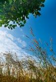 在蓝天背景的花草 图库摄影