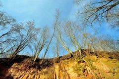 在蓝天背景的赤裸树 早期的春天 库存图片