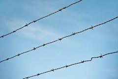 在蓝天背景的铁丝网。锋利的篱芭。 免版税图库摄影