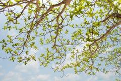 在蓝天背景的绿色叶子 库存照片