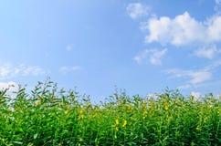 在蓝天背景的绿色小树 免版税库存图片