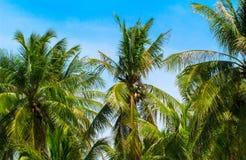 在蓝天背景的绿色椰树棕榈叶 椰子树和蓝天照片与太阳飘动 免版税图库摄影