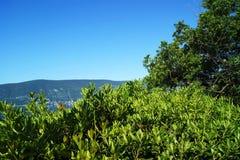 在蓝天背景的绿色  库存照片