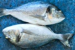 在蓝宝石背景的新鲜的两条未加工的dorado鱼 有选择性 图库摄影