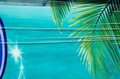 在蓝绿色背景的棕榈叶 库存照片
