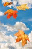 在蓝色云彩sk的秋天红色黄色抽象槭树落的叶子 图库摄影