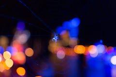 在蓝色光的可怕蜘蛛 库存图片
