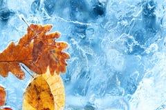 在蓝色冰的下落的秋叶 免版税库存图片