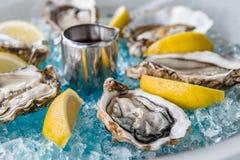 在蓝色冰的牡蛎用柠檬和酒 图库摄影