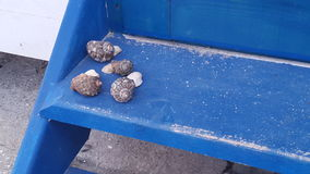 在蓝色台阶的蜗牛和海壳 库存图片