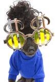 在蓝色和镀铬物的长卷毛狗 库存图片