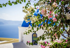 在蓝色圆顶教会背景,圣托里尼海岛,希腊的九重葛灌木 免版税库存照片