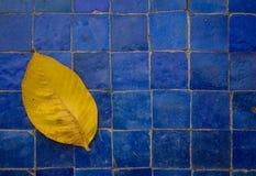 在蓝色地板上的黄色叶子 库存照片