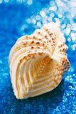 在蓝色小卵石的大白色海星海壳用水 免版税库存图片