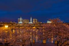在蓝色小时,在波特兰江边的樱花树 库存图片