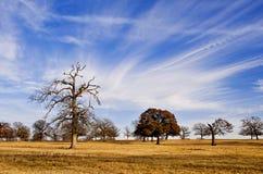 在蓝色得克萨斯天空的云彩形成 库存照片
