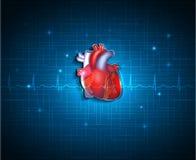在蓝色技术背景的健康心脏 库存照片