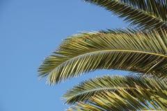 在蓝色晴朗的天空的棕榈树 免版税库存照片