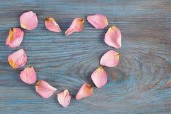 在蓝色木板的桃红色玫瑰花瓣想象心脏形状 库存照片