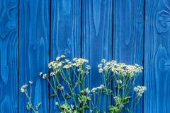在蓝色木桌面看法嘲笑的花卉现代设计 库存图片