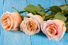 在蓝色木背景的三朵新鲜的米黄玫瑰 免版税库存照片