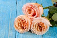 在蓝色木背景的三朵新鲜的米黄玫瑰 库存照片