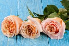 在蓝色木背景的三朵新鲜的米黄玫瑰 免版税库存图片