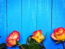在蓝色木背景的三朵黄色红色玫瑰 免版税库存图片