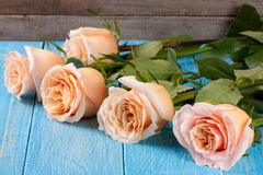 在蓝色木背景的五朵新鲜的米黄玫瑰 免版税库存图片