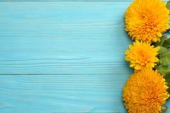 在蓝色木背景的向日葵 与拷贝空间的顶视图 免版税库存图片