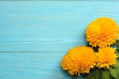 在蓝色木背景的向日葵 与拷贝空间的顶视图 免版税库存照片