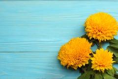 在蓝色木背景的向日葵 与拷贝空间的顶视图 库存图片
