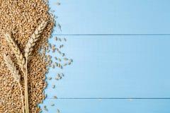 在蓝色木背景的成熟金黄麦子耳朵 免版税库存照片
