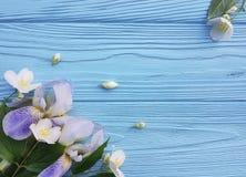 在蓝色木背景的新鲜的虹膜开花秀丽花 库存图片