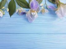 在蓝色木背景的新鲜的虹膜开花秀丽设计卡片高雅花 免版税库存照片