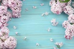 在蓝色木背景的桃红色淡紫色花 与拷贝空间的顶视图 图库摄影